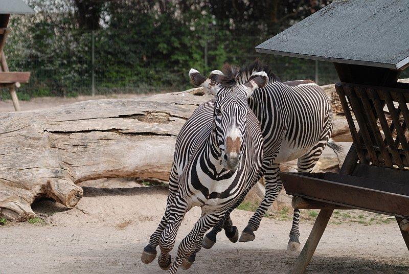 Zoo Welke Köln